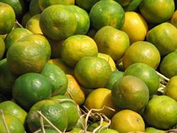 Фрукты — Сладкий лимон