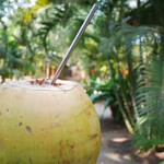 @instagram: A coconut a day keeps the doctor away!  #PalmForestPalolem #tendercoconut