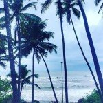 anjuna india goa beach nature summer