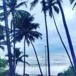 anjuna india goa beach nature summer