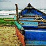 benaulim india goa beach nature