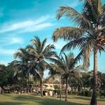 varca india goa hotel trees