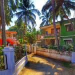 @instagram: #goa #india #candolim #portugues #nature #brightcolor