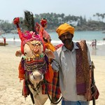 @instagram: Cow-nting down to Holi! ????: @lydiatsmith . . . . . #india #travel #cow #holi #palolem #goa
