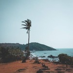 @instagram: ◀ Vagator ▶  A lone palm tree on the hill,  just as lonely as I am ???????? #Goa #vibes #vagator
