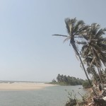 @instagram: paradise found. . . . #paradise #palmtrees #beach #vacay #india #goa #mandrem