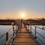 @instagram: Remeniscing sunset walks to the beach.  #Goa #Mandrem #Sunset #Beach