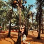@instagram: Monkey???? Мыслями я ещё там осталась, вспоминая теплейшей океан, пальмы, сумасшедших водил и друзей. Священных коров в этом раз было очень мало... Обычно они толпами ходят по дорогам и пляжам. Турист и корова привычная картина для этих мест, но не в этот