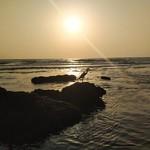 @instagram: #Индия#Гоа#Ашвем#India#Goa#Ashvem